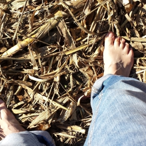 ich habe nach unten fotografiert und das gemähte, ausgetrocknete Maisfeld mit meinen Beinen eingefangen, ich bin barfuss