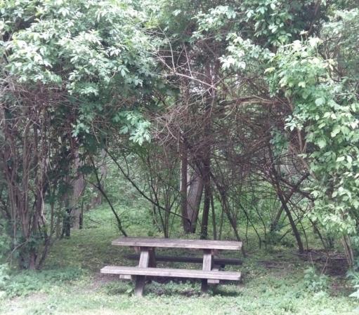 eine Vierer-Holzbank mit Tisch, umrahmt von Waldbäumen