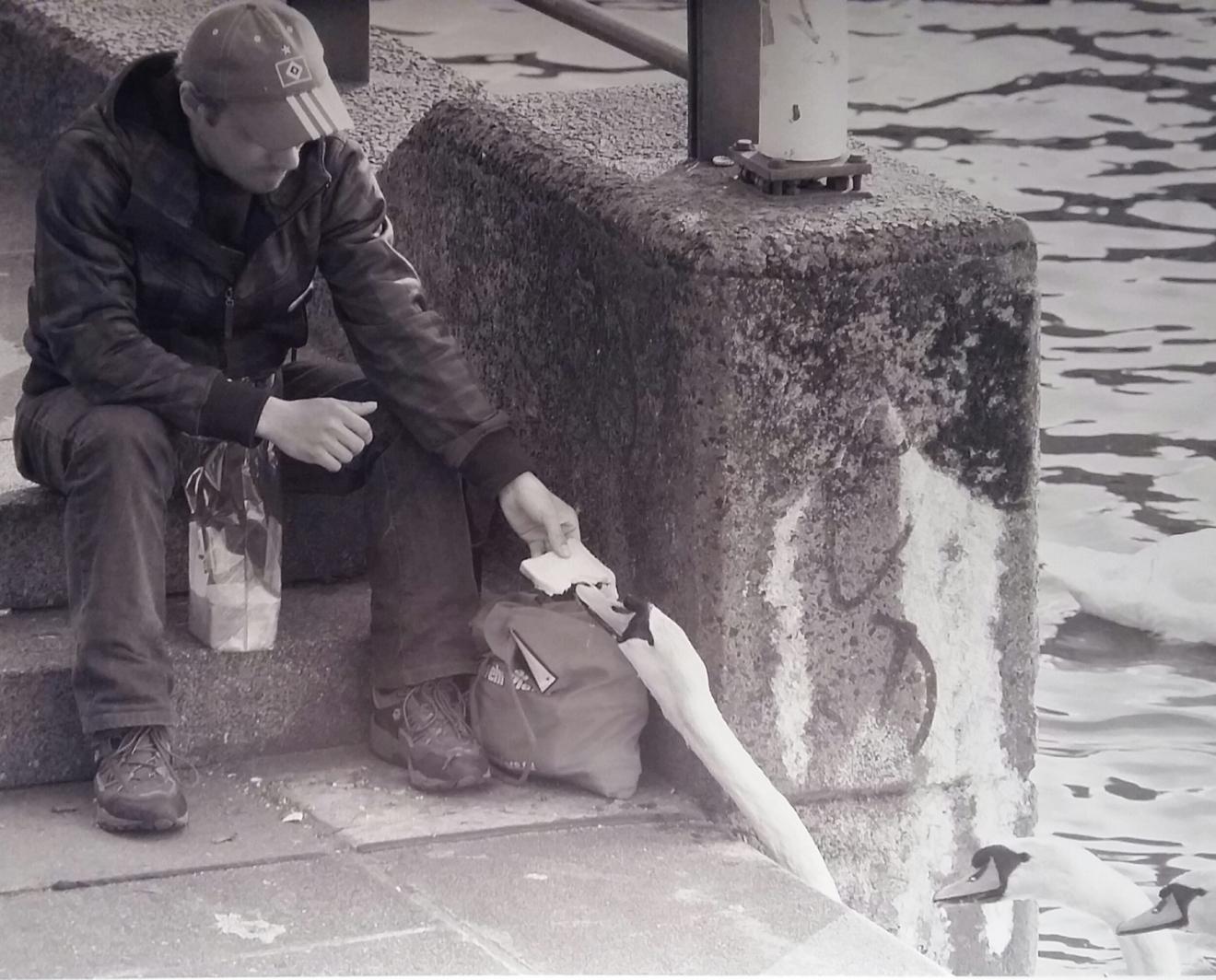 ein Mann sitzt an Kaimauer und teilt sein Brot mit vorbeischwimmenden Schwänen