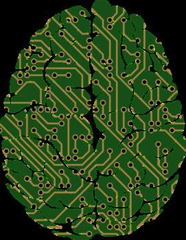 in grün gemaltes menschliches Gehirn von oben, in Grün gehalten, PC-Verschaltungen markieren Synapsen