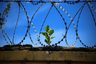 ein Stacheldraht im Vordergrund und dahinter wächst auf einer angedeuteten Mauer eine sehr grüne Pflanze, zur Symbolisierung der Hoffnung auf Freiheit