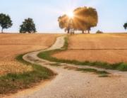 ein unbefestigter Feldweg läuft Richtung Horizont, auf das Sonnenlicht hinter einem Baum zu