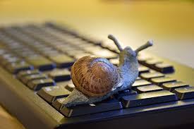 über eine Computer-Tastatur kriecht im Vordergrund eine Weinbergschnecke, kein Hintergrund
