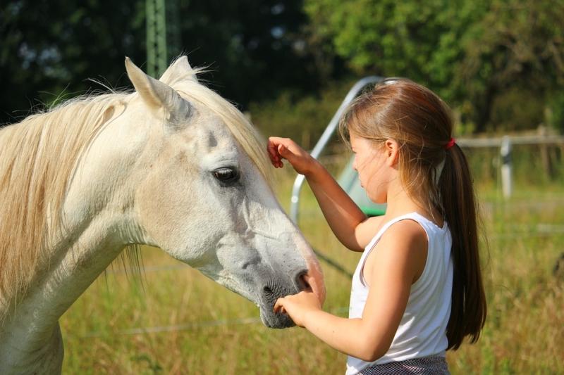 von links ein weisses kleines Pferd mit leicht roter Mähne im Profil und von rechts ein kleines Mädchen mit Pferdeschwanz, welches innig in Kontakt mit dem Pferd wirkt und den Pferdekopf berührt