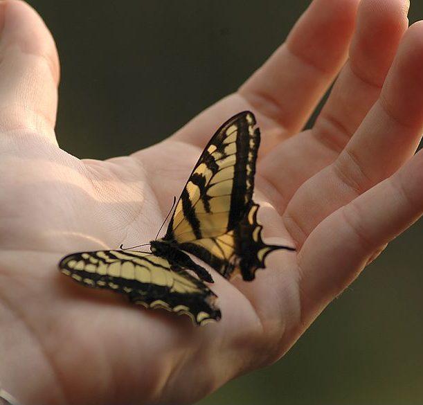 SBSK - ein Schmetterling sitzt auf der Handfläche