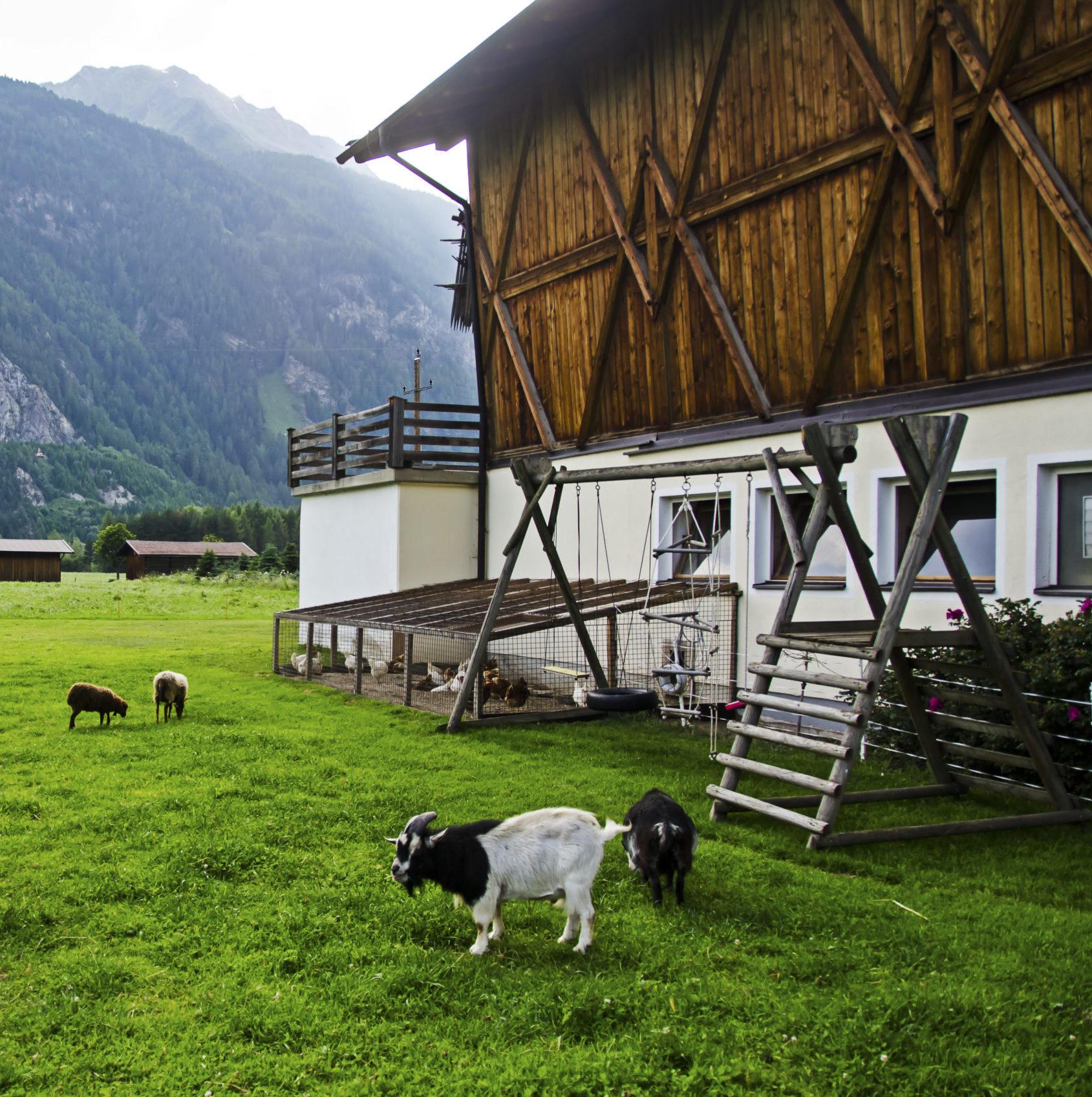 ein Bauernhof mit Ziegen davor, irgendwo in einem Tal in den Bergen