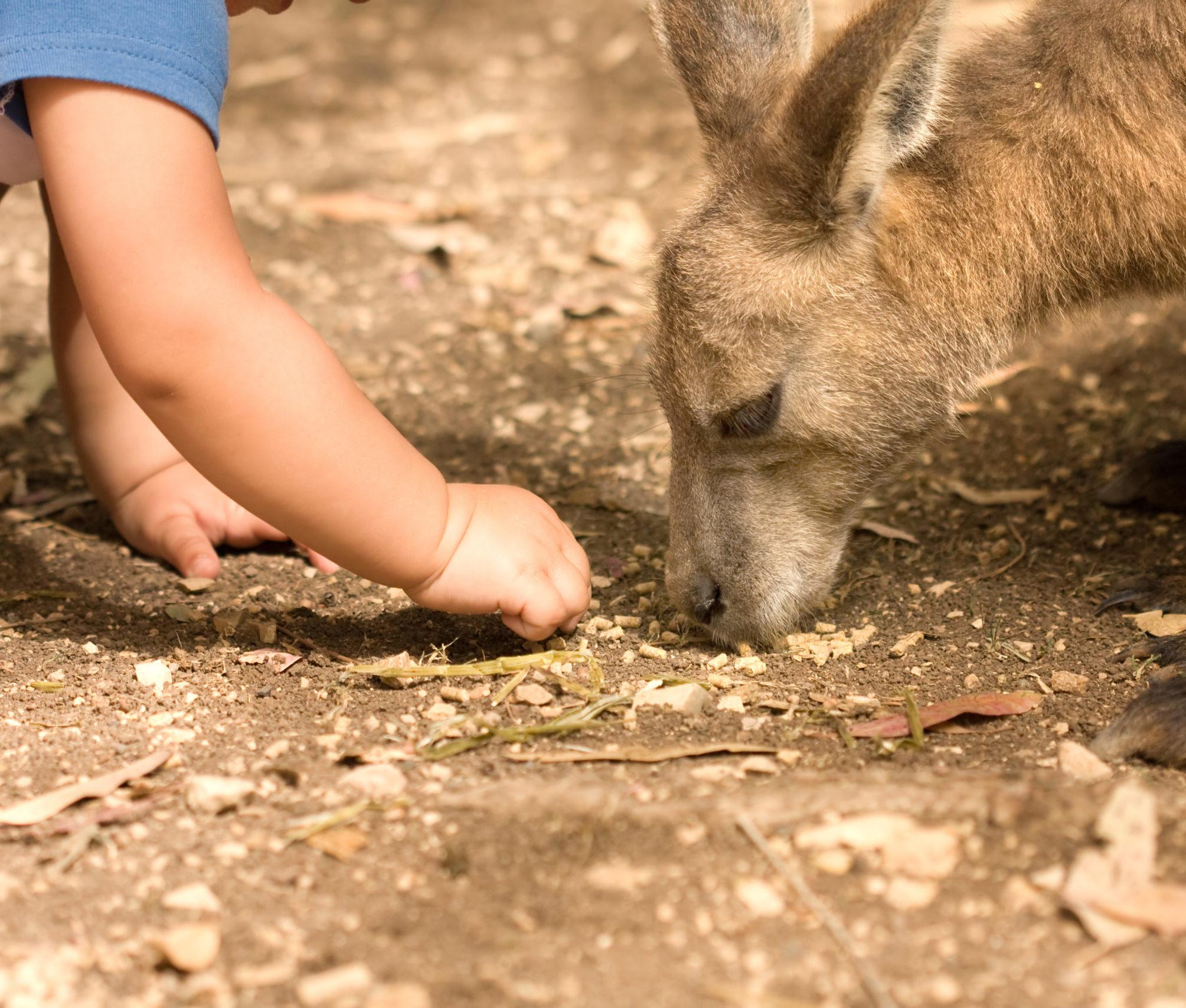 man sieht einen Kleinkindarm, das Kind ordnet etwas auf erdigem Untergrund, ihm gegenüber sieht man nur den Kopf eines Känguruhs, das in der Erde schnuppert