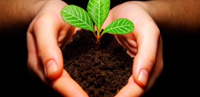 zwei Hände halten Erde, in der ein kleiner Pflanzentrieb wächst
