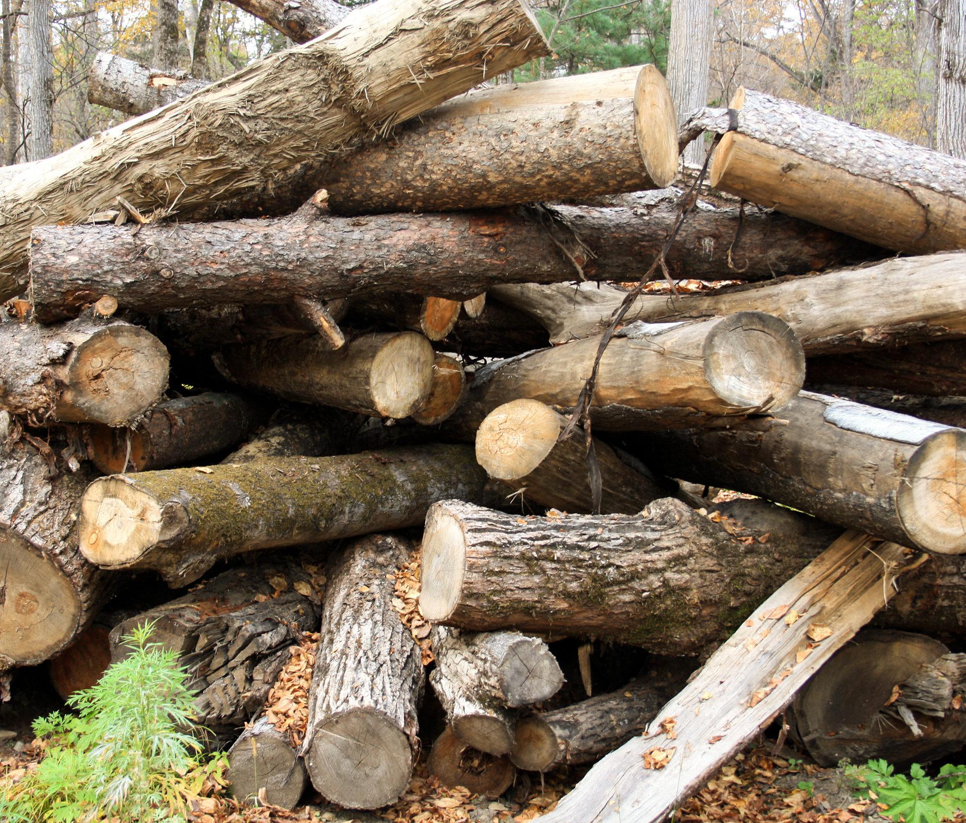 einige Holzstämme liegen ungeordnet auf einem Haufen