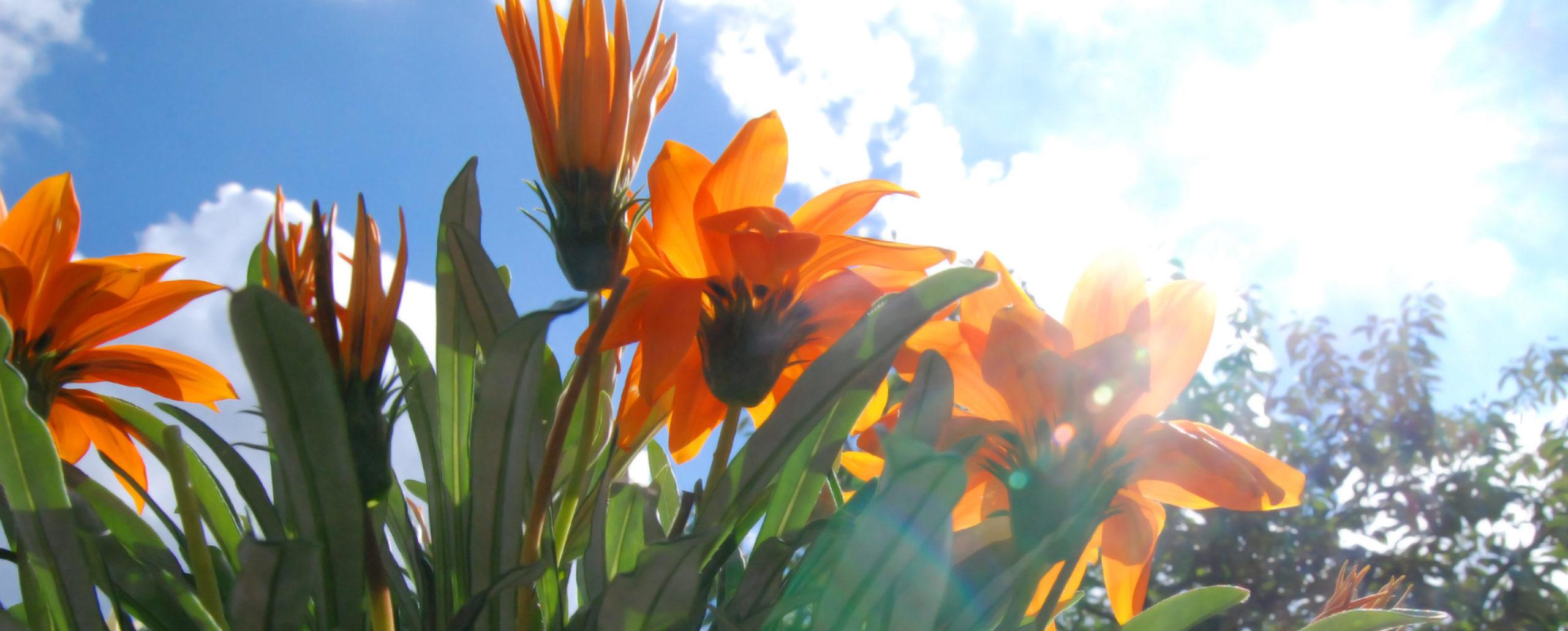 Blumen im Gegenlicht