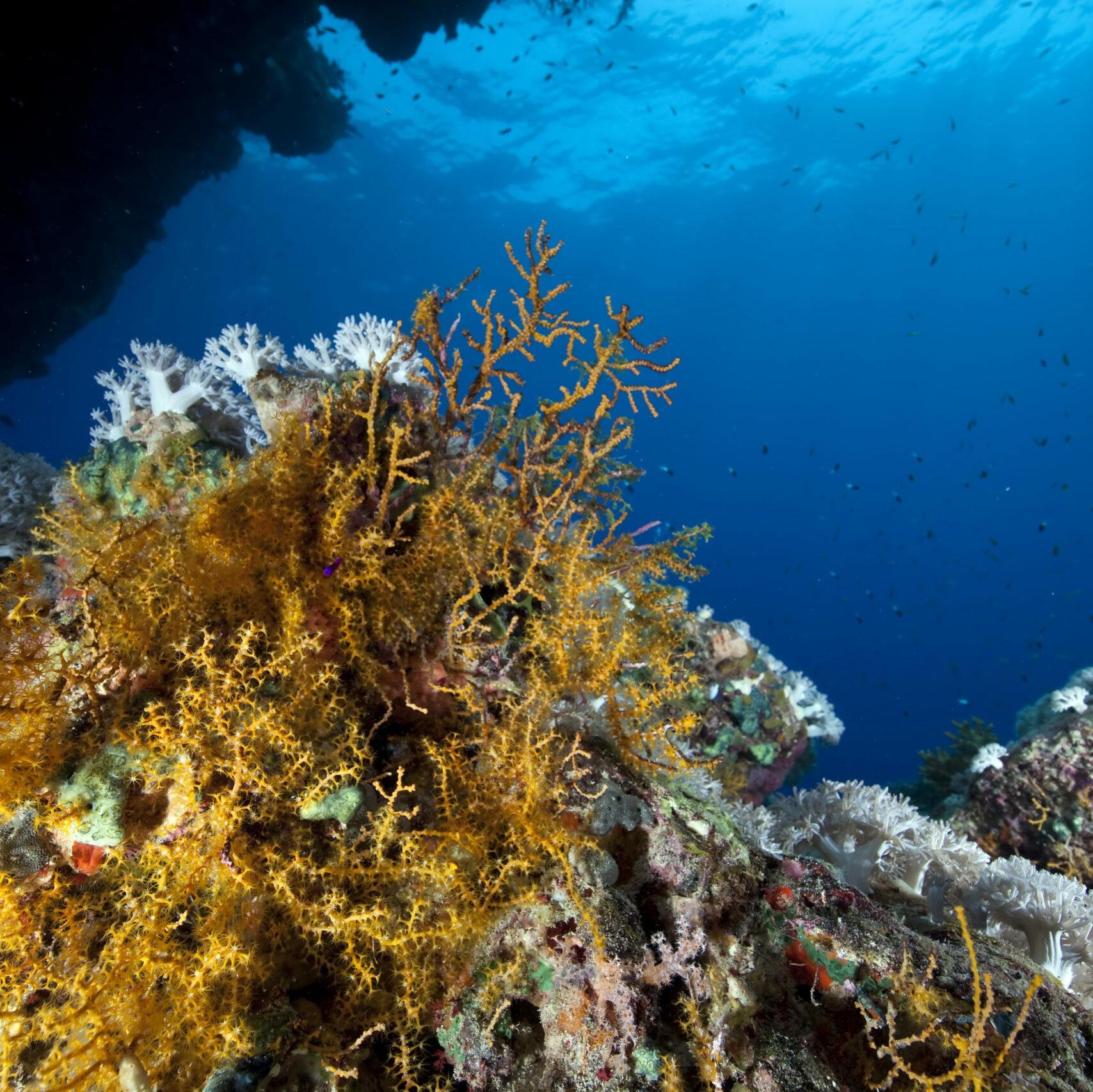 ein Korallenriff mit kleinen Fischen im blauen Hintergrund