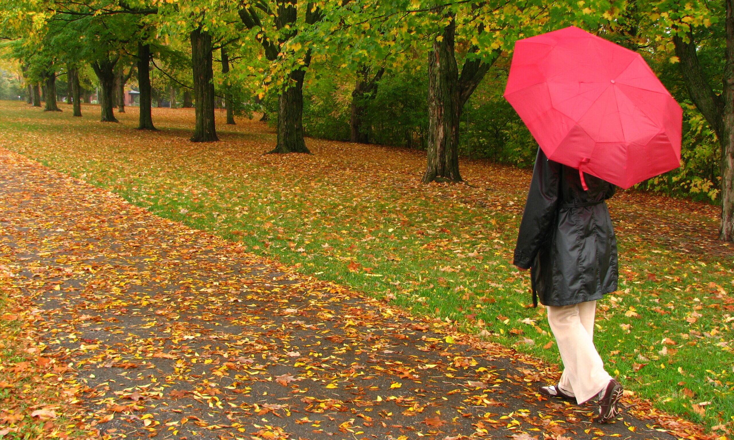 eine Frau mit Regenmantel und rotem Regenschirm geht durch eine Allee voller gelber Herbstblätter am Boden und auf den Bäumen